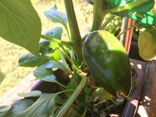 Obst und Gemüse Eigene Ernte