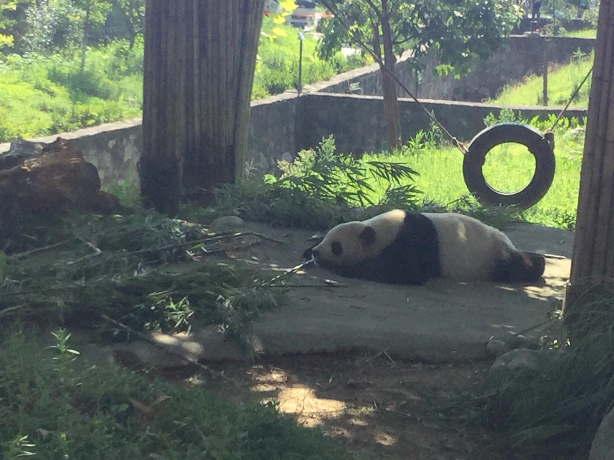Panda Tai Shan, Apple iPad mini 4, iPad mini 4 back camera 3.3mm f/2.4