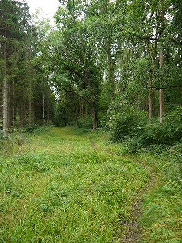 Pinsley Wood