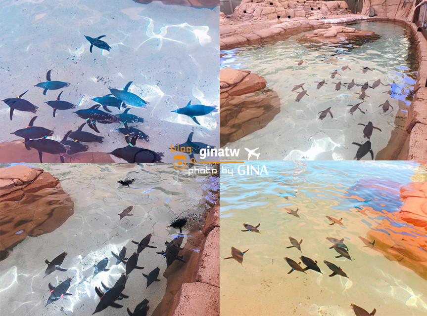【昆士蘭自由行】澳洲黃金海岸|海洋世界攻略(Gold Coast Sea World)可愛海豚、海豹、企鵝一次通通看 @GINA環球旅行生活|不會韓文也可以去韓國 🇹🇼