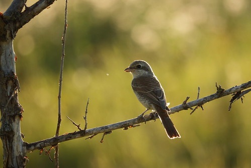 canon canoneos70d canonefs55250mmf456isstm bird backlight