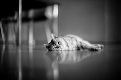 Leica M Monochrom 246