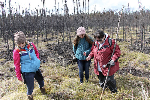 Audre Gifford, Jasmine Koster and Sharon Tyone search for morel mushrooms earlier this summer during a tribal outing through forest burned in last year's Card Street fire.