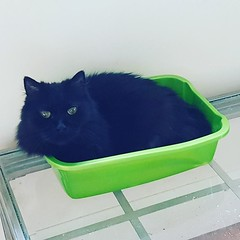 This is no longer a litter box. #catsofinstagram #roccothecat