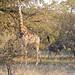 SouthAfrica_Rukiya_Photo_184