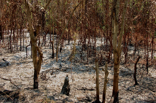 Degraded land | by CIFOR