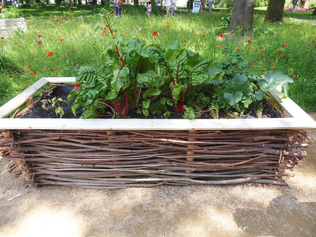 Landesgartenschau Apolda 2017 - Urban gardening