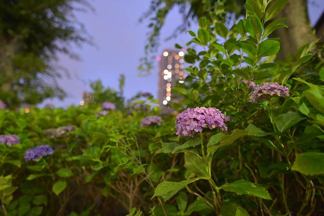 DSC_3264, Nikon D610, AF-S Nikkor 20mm f/1.8G ED