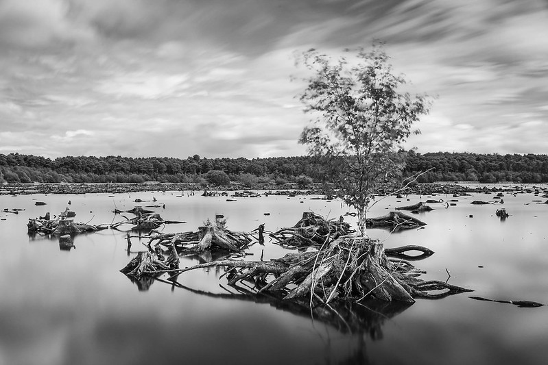 Blakemere Moss, Delamere Forest, Cheshire.