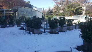 el pacífico nevado