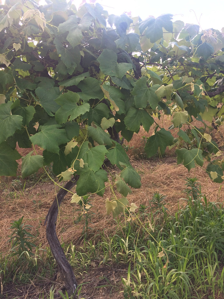 21 Brix Winery, Portland, NY 4