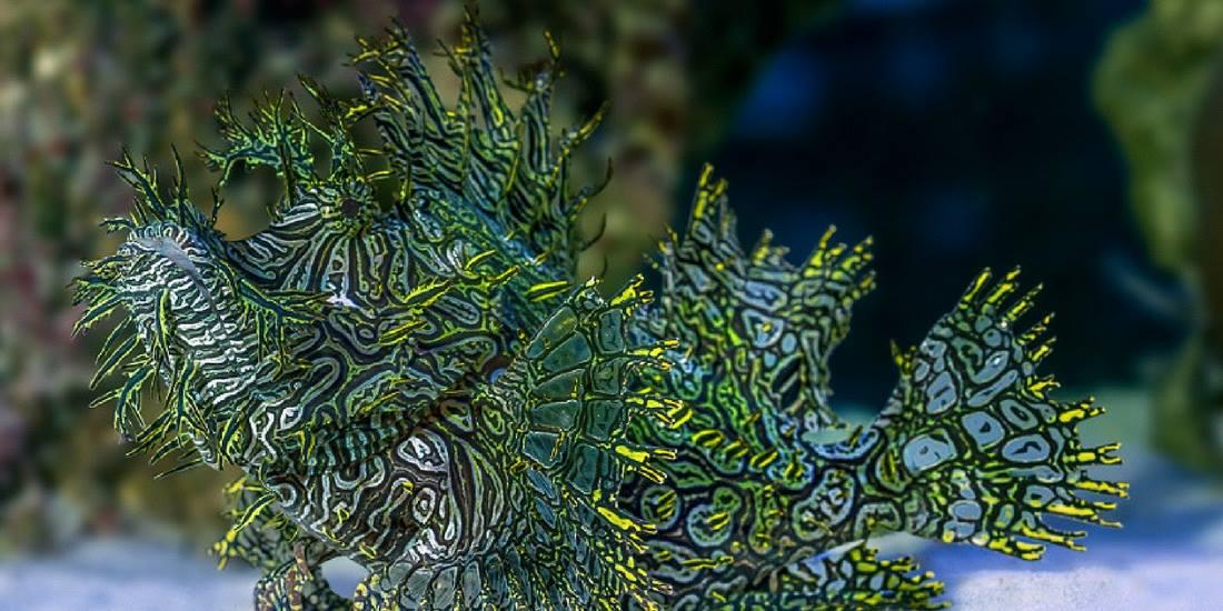 art of scuba diving