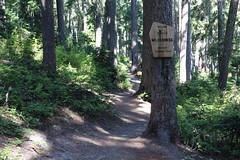 PCT hike from Leech Lake to Dumbell Lake