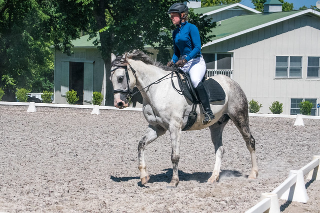 20170709 Grif Dressage Tests-39