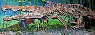 Redondasaurus bermani (fossil reptile) (Upper Triassic; New Mexico, USA) 2