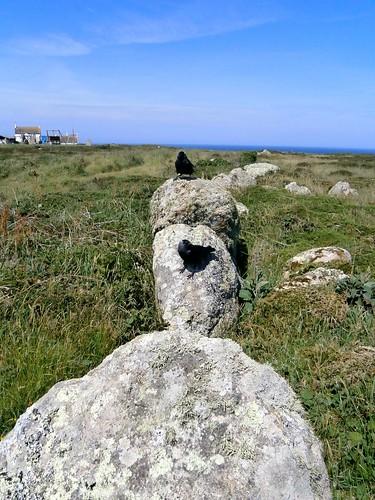 Jackdaw curiosity, Lands End, Cornwall 05-17
