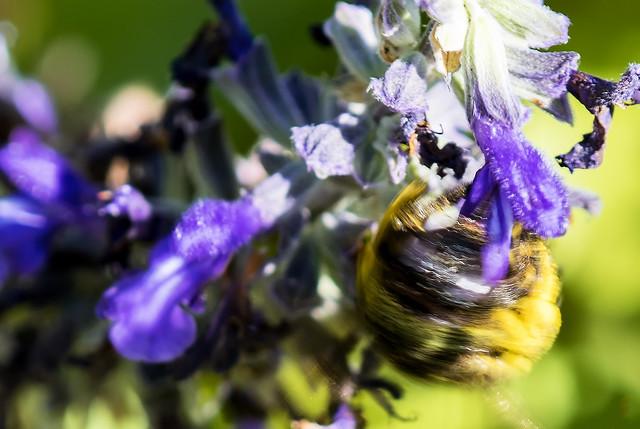 Bumblebee Ball
