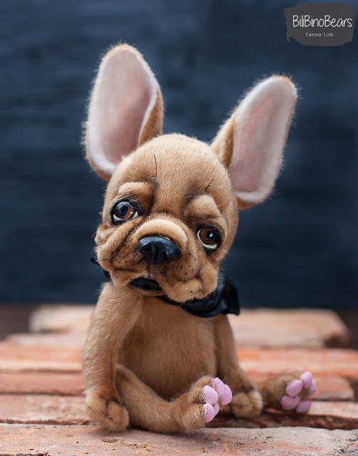 Harvey - the frenchie