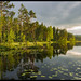 Forest lake by mojohns61