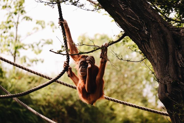 Im Zoo (5)