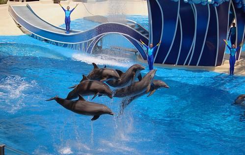 Dolphin Days Show