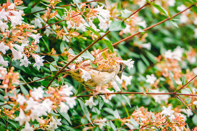 Ueno Bloom