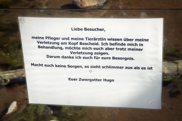 Zwergotter Hugo