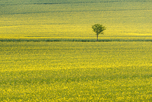 029_Flickr Landschaft.jpg