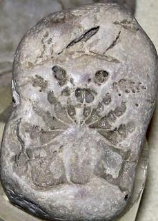 Eurypterid (fossil sea scorpion) (probably Silurian; South Bass Island, Lake Erie, Ohio, USA) 3