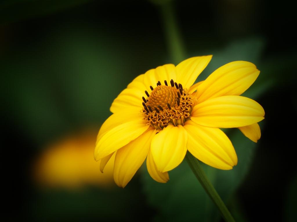 Flora – Blume 1