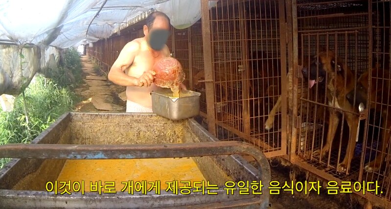 The Dog Meat Professional: South Korea