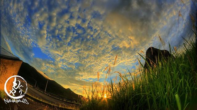 野草の間からの太陽♪