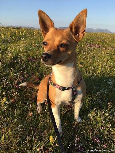 lostdogbótharnaminegalway lost dog bóthar na mine galway july 2017