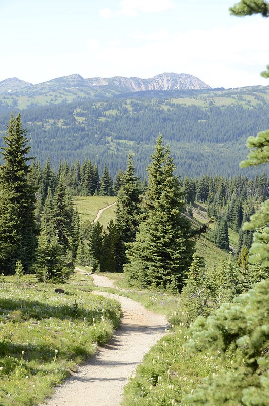 Trail through the Manning park peaks