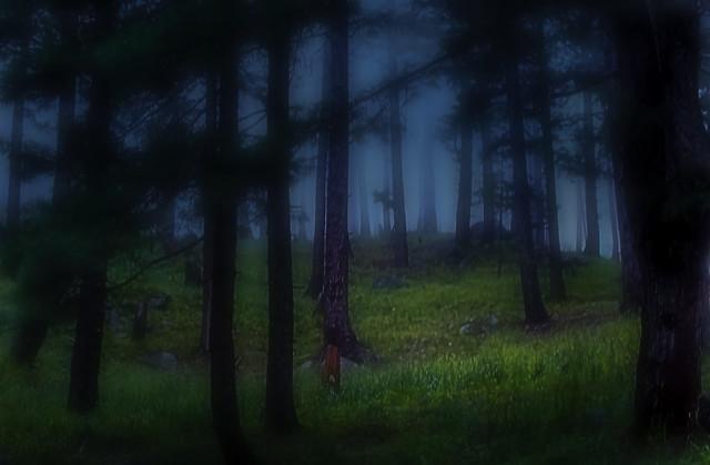 Barniyal forest, Fujifilm FinePix HS30EXR