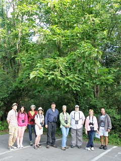 Birders Under Catalpa by Penny O'Connor