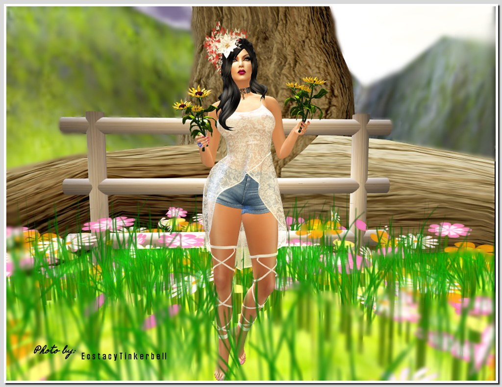 Sonnenblumenpflücken