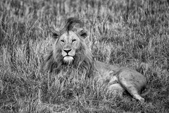 Ngorongoro Crater in Black and White - 2017