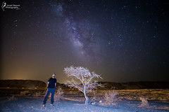 the tree, the stars and me