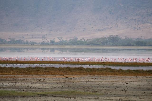 Flamingos - Ngorongoro Crater
