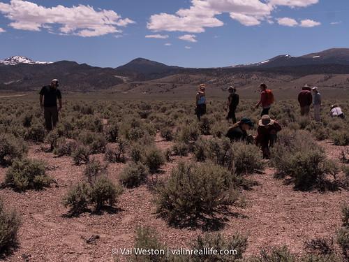 nevada native plant society - val in rea life