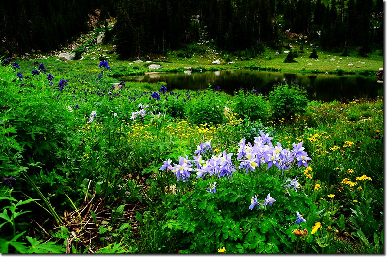 The unnamed lake is surround by wildflowers (8)