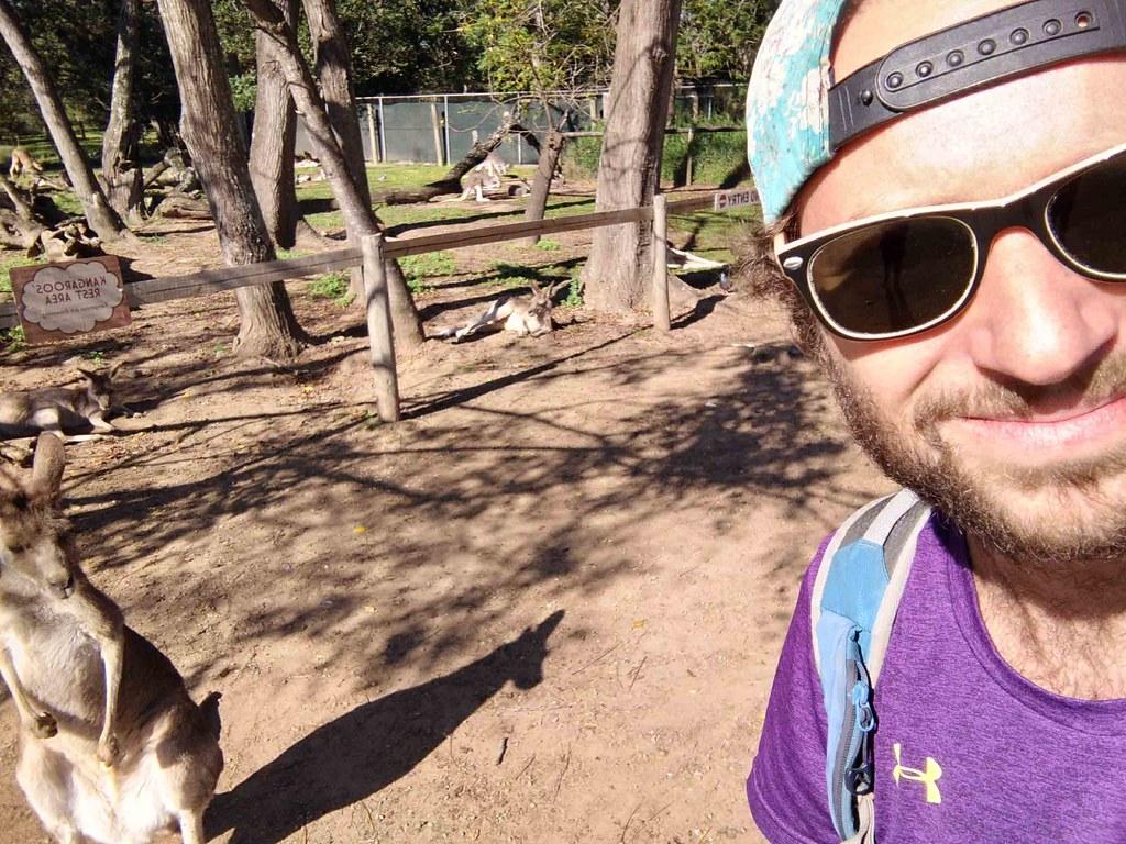 Brisbane - Lone Pine - Kangourou et Flo