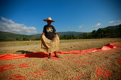 CCT NCBA coffee drying field Tibar - 22-06-11-18