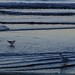 seagulls paddling