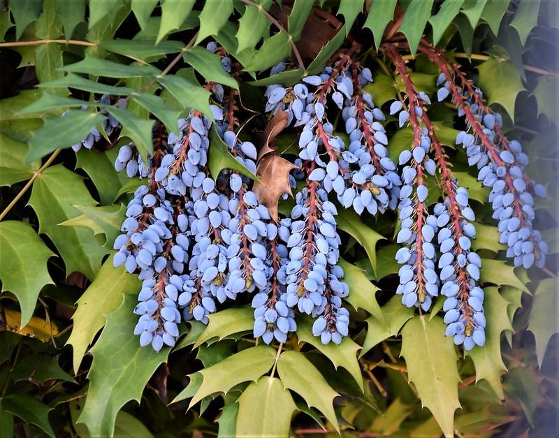 Berries 16.07 (2)
