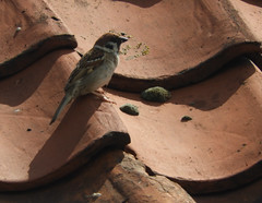 HolderTree sparrow
