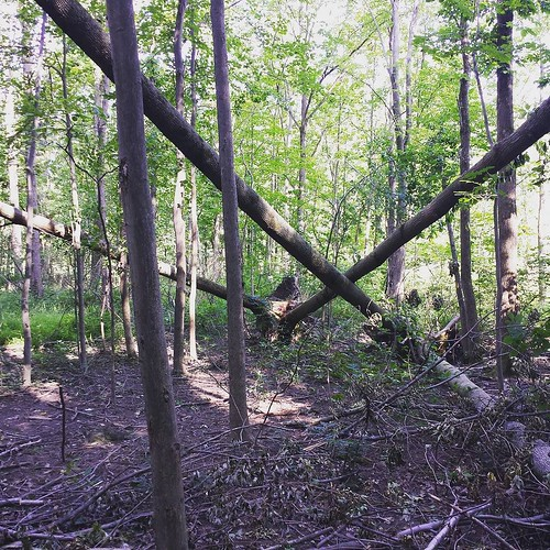 Tornado damage 5. Trees pointing in all the wrong directions. #tornado #ChestnutRidge #wny #OrchardPark #summer #hiking #nature