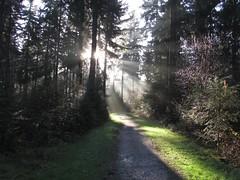 Bospad nabij de Zwarteweg te Lage Vuursche