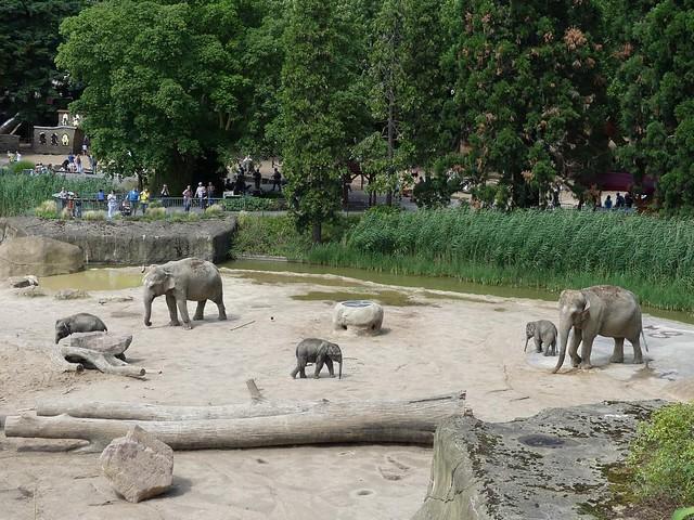 Elefanten, Zoo Köln